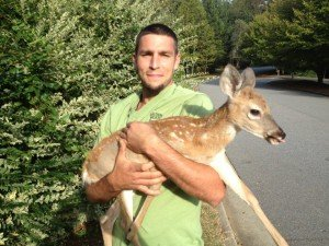Bruce takinig a baby deer fawn to a rehabber specific to deer