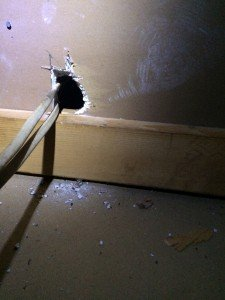 rat sign in a home