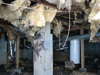 Rat Damage in Roswell Georgia